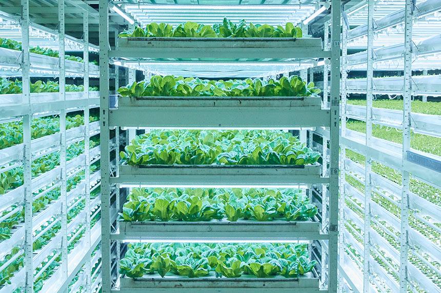 すでにあなたも食べているかも!? 植物工場の先駆け〈MIRAI〉が描く 未来の野菜とは?