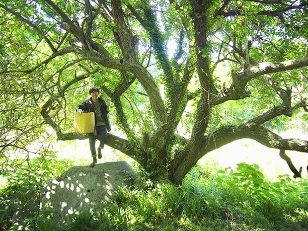 たくさんの実をつける、梅の木の下で。