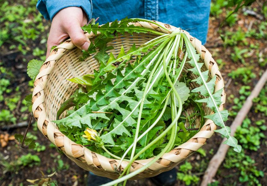 みんなで野草を食べてみよう!  自然豊かな伊豆、  身近な山で野草を学ぶ