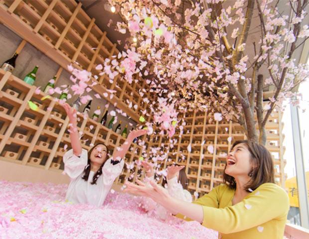 「SAKURA CHILL BAR by佐賀」の「桜プール」。開催期間中は連日行列ができるなど、かなりの反響が寄せられました。