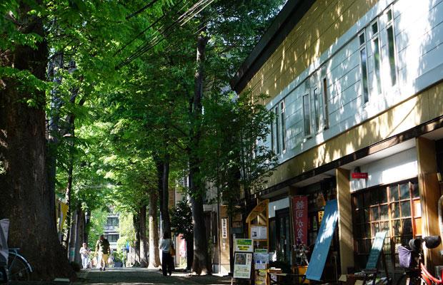 雑司が谷のシンボル・鬼子母神の参道。樹齢400年の欅並木に沿ってカフェや雑貨店、住宅が並ぶ。