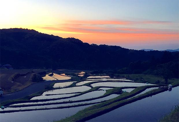 糸島の美しい棚田の風景。