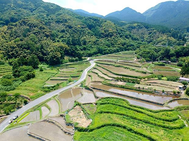 耕作放棄地があちらこちらに目立つ、糸島の棚田。