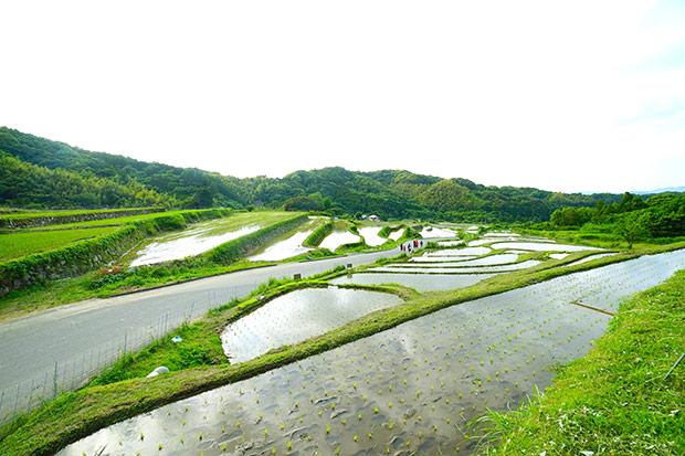 糸島の棚田。
