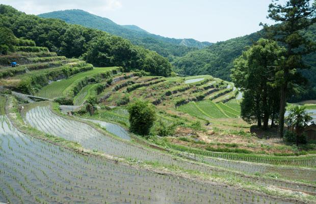 写真中央の耕作されてない田んぼが気になる。