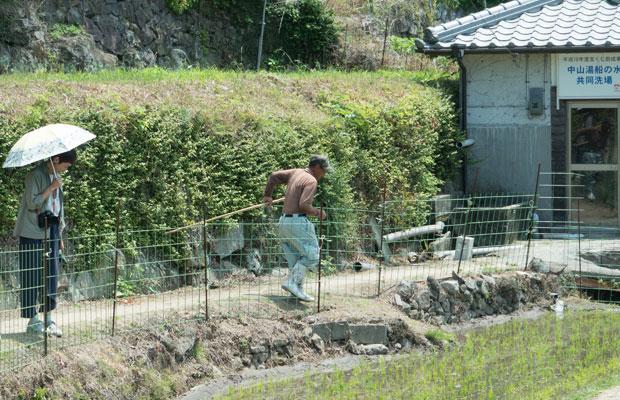 田んぼの手入れをしていたおじちゃん。沢ガニが畦塗り(田んぼの周りの盛り上げた土の壁)に穴を開けてしまうらしく、そうすると水が流れ出てしまうので、そのチェックをしているそう。沢ガニ発見!