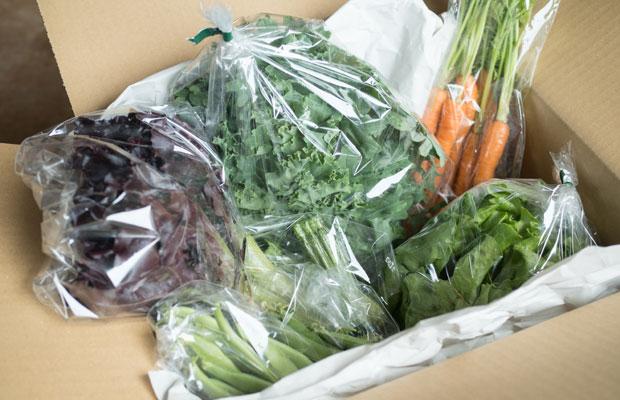 年間通していろいろな野菜を育てています。旬野菜セットとして販売。