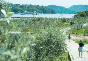 オリーブ、山岳霊場に醤油蔵。瀬戸内国際芸術祭と併せて楽しむ小豆島の旅