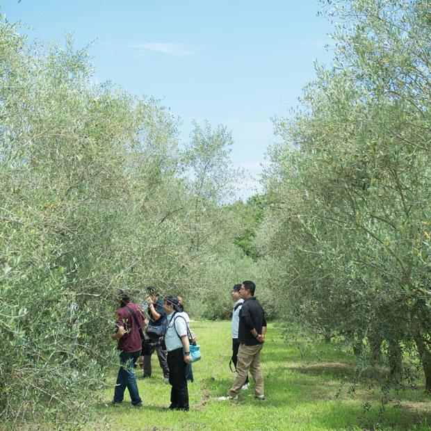 オリーブ畑の散策はそれだけで気持ちいい。