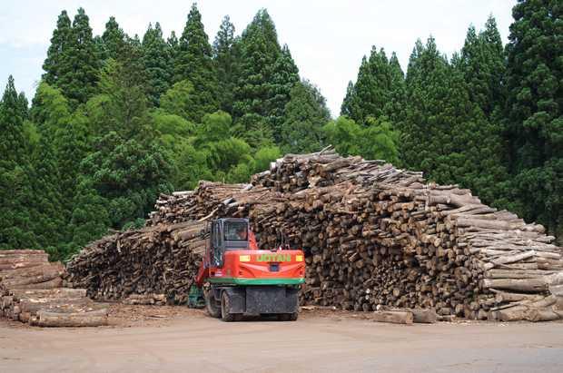 森林組合に貯木された虫喰いナラの山。(撮影:山﨑義樹[Designノyamazakiyoshiki])