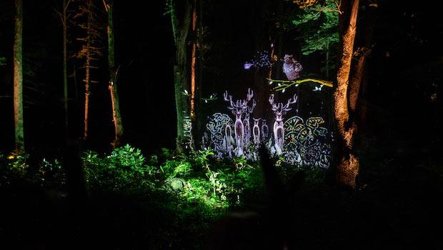 デジタルアートな  夜の阿寒湖をウォーキング。  体験型アトラクション  〈KAMUY LUMINA〉が開催