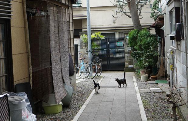 鬼子母神参道の脇道は、猫たちの遊び場。
