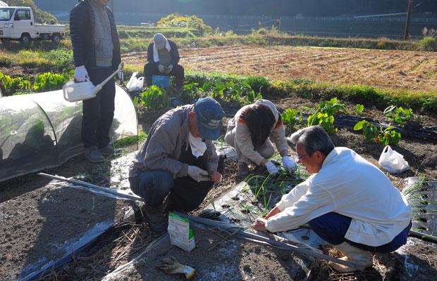 地元住民の方と、近隣の農地でタマネギ栽培。
