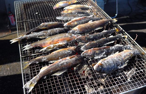 星野川で釣った鮎は、イベントで塩焼きにして、おもてなし。