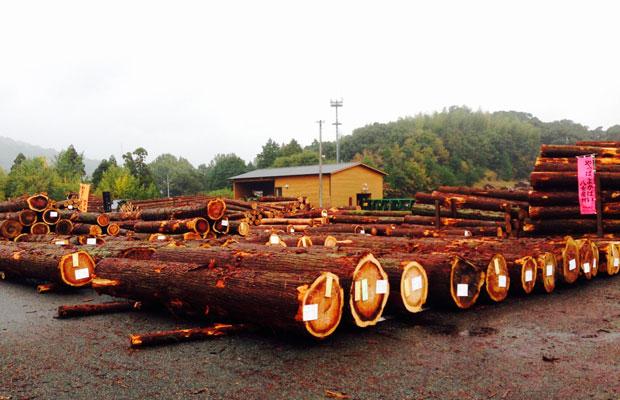 原木市場に並んだ木(八女木材共販所)。太さ(直径)、長さ、材種、曲がり具合、割れ具合などに応じて選別され、競売にかけられる。