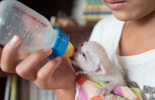 8月頭に保護した子猫。保護した時は160グラムほどでした。いろは(娘)が懸命にお世話。