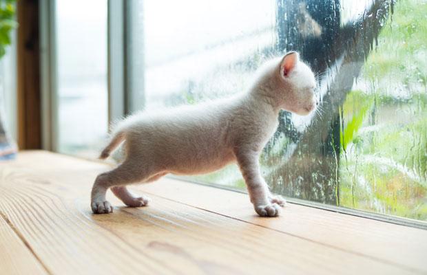 保護してから10日後。体重も順調に増え、日に日にネコらしくなっていく。