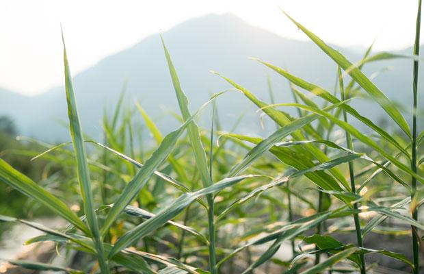 山の向こうから太陽が出てきます。暑くなる〜。