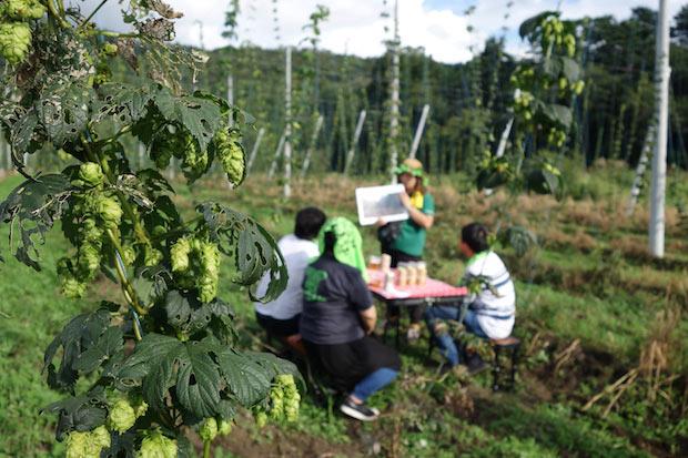 ホップの花が咲くのは7月。遠野名物バケツジンギスカンとビールでお花見をするそう。ビールに使用されるのは、この花を包むように育った毬花。