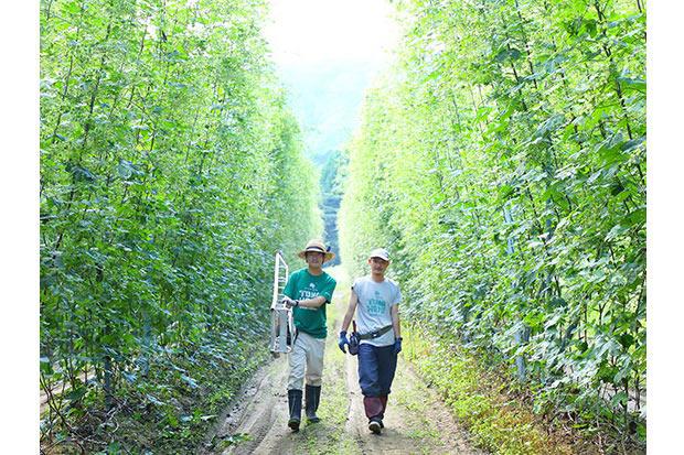 ツアー訪問地のひとつ、ビールの原料「ホップ」の畑(岩手県遠野市)。産地の風景は、ただその育つ姿や実りを眺めるだけでも美しい。