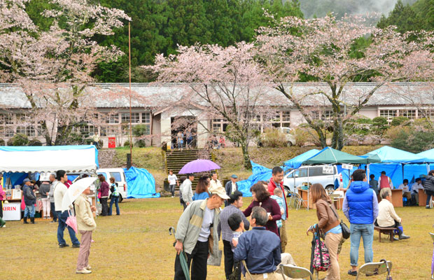 雨が降る桜まつり。2015年の様子。