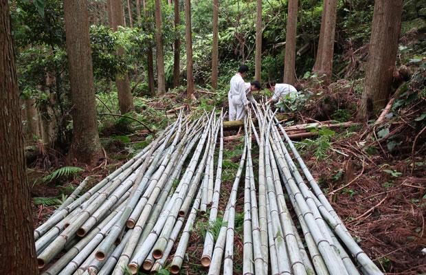 設計の方針が決まり、部材の数量が算出できればいよいよ竹の伐採。林業のおもしろさ、難しさ、奥深さを体験でもって知りました。