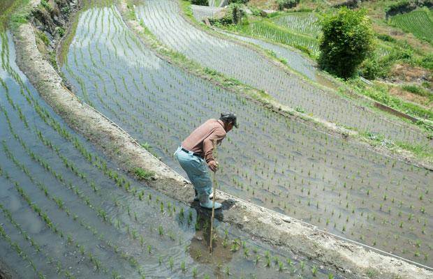 4月、田植えの時期の中山。狭くていびつな形の田んぼでお米を育てるのはとても大変。