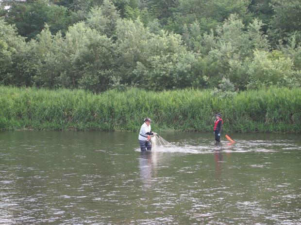 仕事が早く終わったときは滝さんと鮎漁へ。これも秋田だからできる体験。