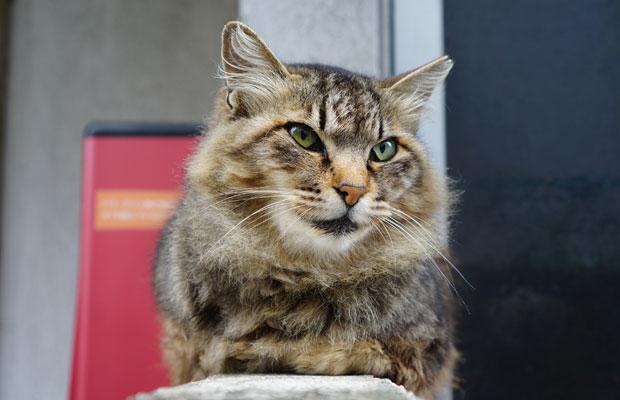 雑司が谷の猫も素知らぬ顔。
