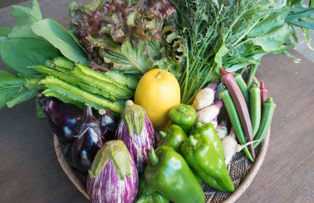 いま採れる野菜はこんな感じです。夏の暑さが落ち着き、みずみずしい葉物野菜が採れ始めました。