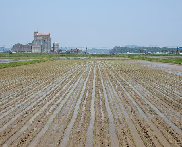 福岡県宗像市内にある福島さんの田んぼ。ここで自然栽培の酒米・山田錦が栽培されている。写真は田植え時の様子。