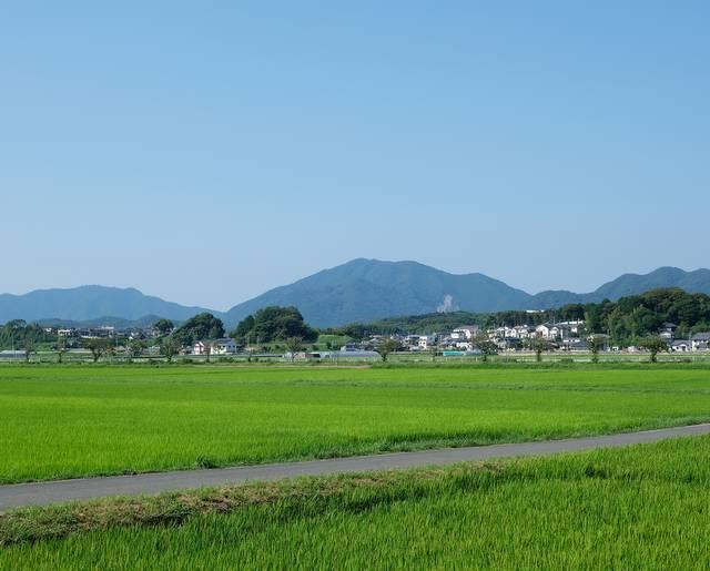 写真は8月下旬の田んぼ。すっかり緑が濃くなっていた。いよいよ収穫が近づいている。