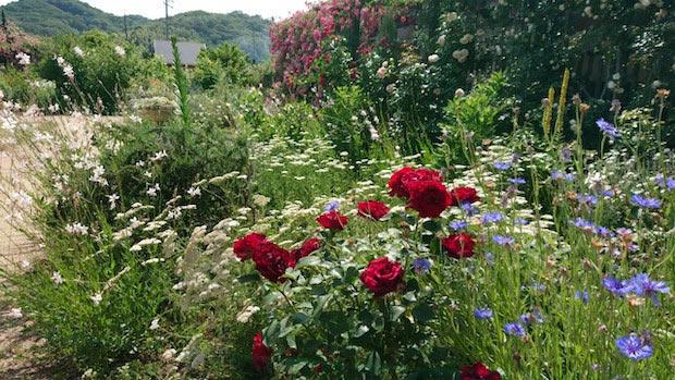 1年を通してさまざまな花が庭園を彩りますが、毎年11月ごろは冬支度で寂しい雰囲気になっていました。