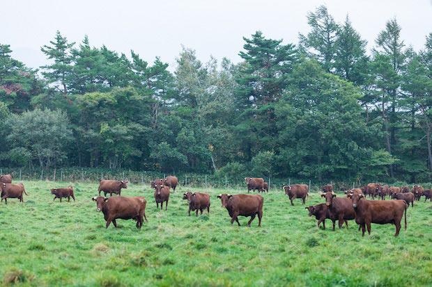 稲庭高原はツーリングコースにもなっていて、柵の外から牧野を自由に見ることができます。