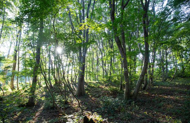宿の周りは森林セラピーロードと呼ばれるハイキングコースになっている。森に入り進んでいくと小さな沢があり、目にも耳にも心地よい空間が広がる。早起きして朝食前に散策するのもおすすめ。