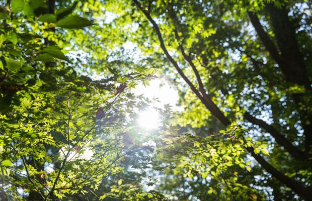 自然のアクティビティに事欠かない妙高。夏は登山、トレッキング、サイクリングに加え、車で15分の野尻湖で釣りやSUP、カヤックを楽しめる。疲れた体は温泉であたためて。