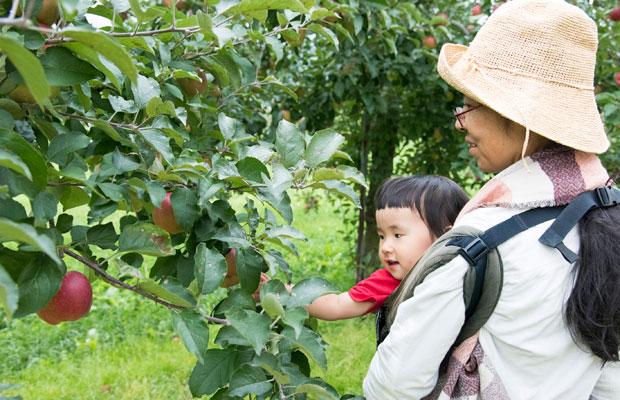 美流渡のお隣の毛陽というエリアは果樹の栽培が盛ん。りんご農園でとれたてのりんごはおいしい。