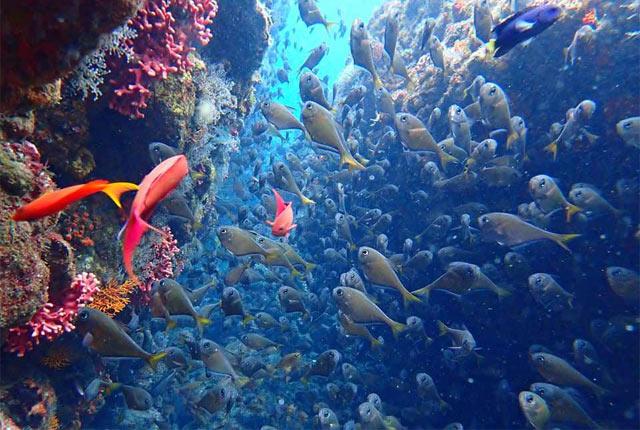 カラフルな魚が泳ぐ水中写真