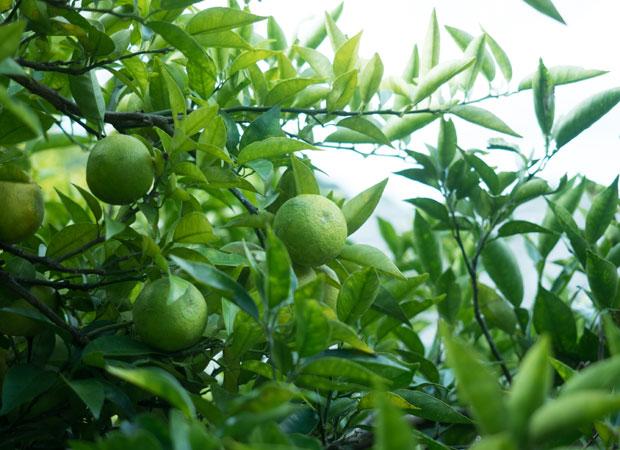 実を収穫したり、枝を剪定したり、手入れし続けることで恵みをいただける。