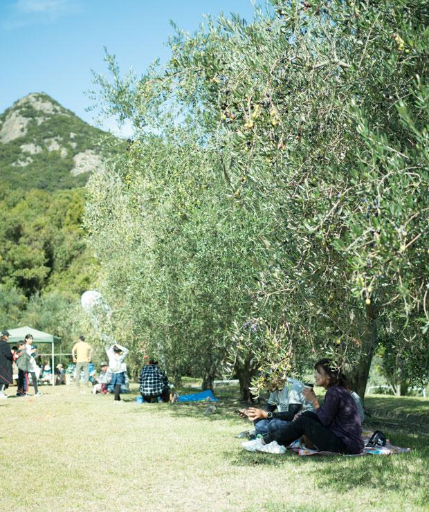 オリーブの木陰は最高の休憩スポット。