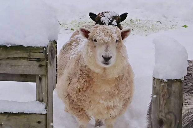 青森県産ならではのあたたかさ。青森育ちの羊毛の魅力を伝える〈aomori wool〉が魅力的!