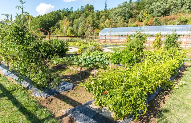 敷地内には菜園もあり、ここでとれた野菜やエディブルフラワーもレストランの料理に使用されている。