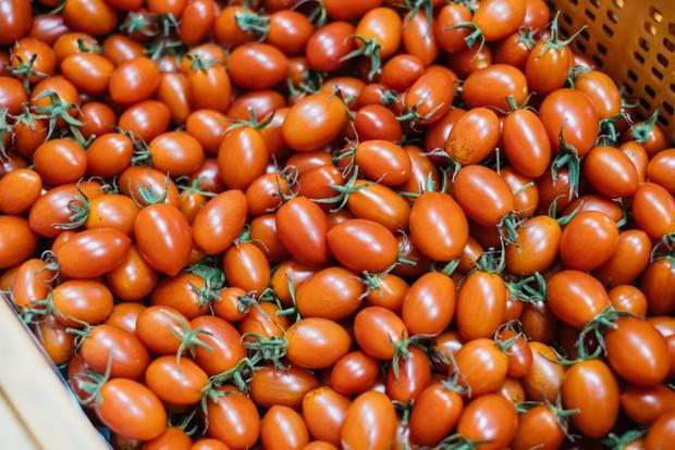 創業当初からつくり続けているミニトマトの〈アイコ〉。細長い形が特徴。