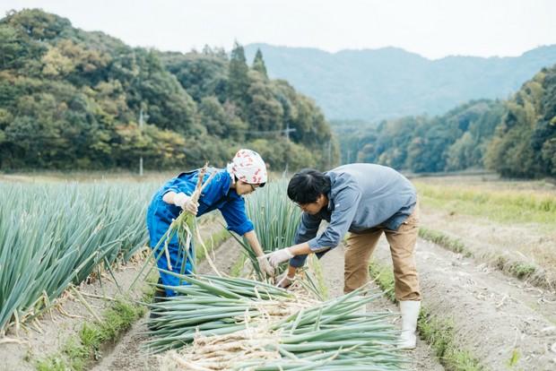 一緒に白ネギを収穫する才木さん夫妻。