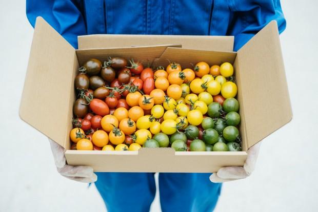 〈おかわりカラフルトマト〉。トマトは産直アプリ「ポケットマルシェ」で直販を行っている(収穫期間中のみ)。〈サンココア、アイコ、サンチェリー、サンオレンジ、サンイエロー、サングリーン〉。時季に応じて多様なミニトマトがぎっしり入っている。
