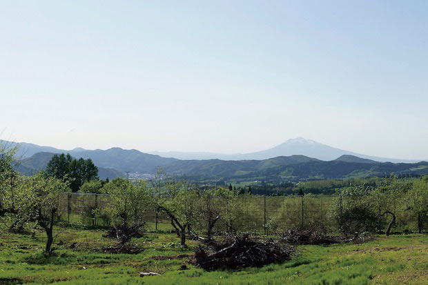 青森県を代表する名峰・岩木山が臨める〈医果同源アップルバレー〉。東京ドーム約4個分の広大な農場でりんごの木々が育まれています。