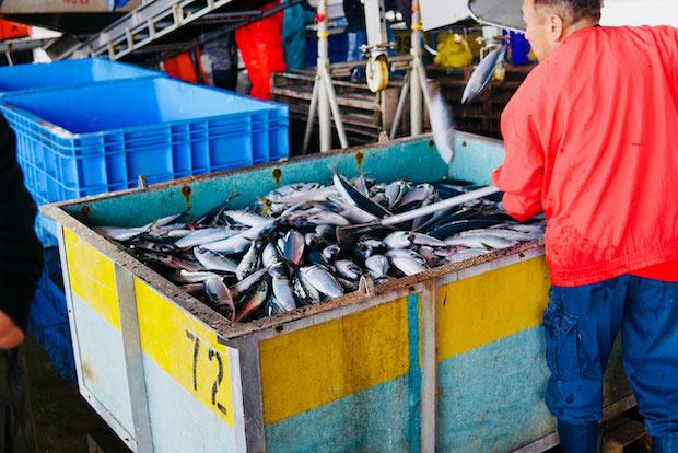 節の原料となる魚は、主に鰹やサバ、ムロアジ。