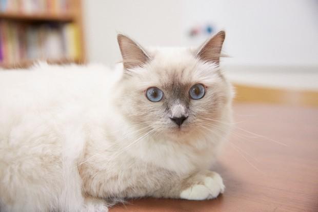 新入「猫」社員の小春ちゃん。