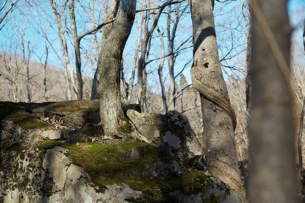 長良川の源流域に残る自然。