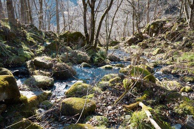 水が岩の間から滲みだしていた。まさにここが長良川の源流だ。